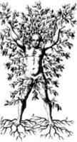 Der Baummensch